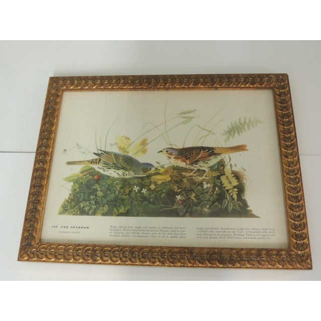 Set of 3 Bird Prints Framed in Gold Frames For Sale - Image 4 of 7