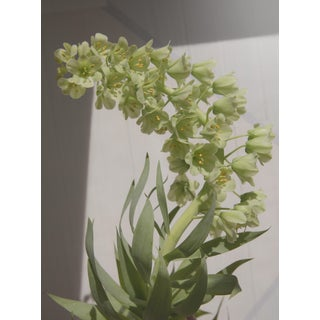 Earthly: Veratrum I, 2020' Contemporary Photograph by Claiborne Swanson Frank, 30x40