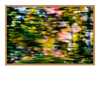 Through the Trees by Geoffrey Baris, Art Print in Gold Frame, Medium For Sale