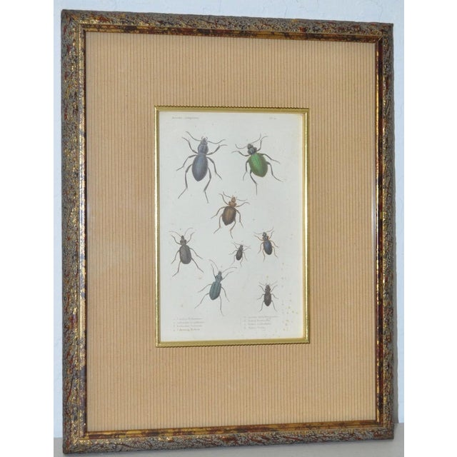 Late 19th Century Pair of 19th Century Hand Colored Insect Plates - Framed For Sale - Image 5 of 8