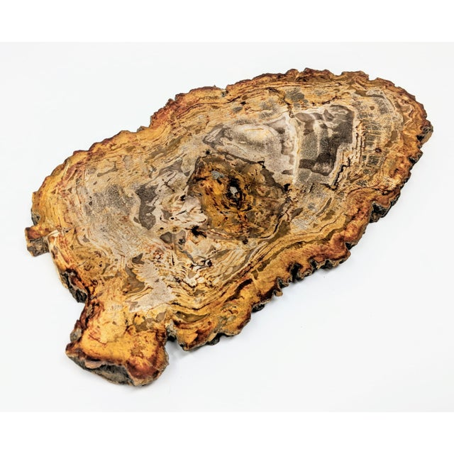 Arhaus Inspired Petrified Wood Tray For Sale - Image 10 of 10