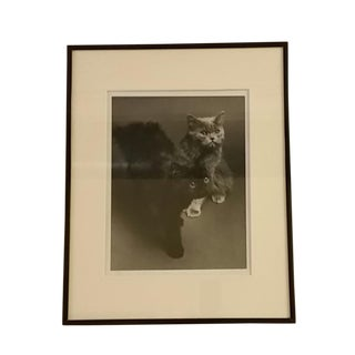 1960s Black & White Photo of Persian Kittens For Sale