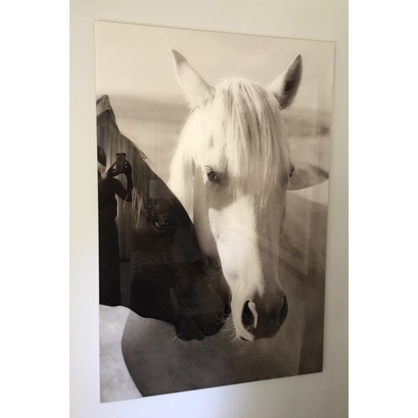 Edelman Sermo Per Equus Lindisimo Photograph - Image 4 of 4