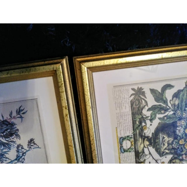 1980s Set of 9 Vintage Botanical Prints in Gold Antique Frames For Sale - Image 5 of 8