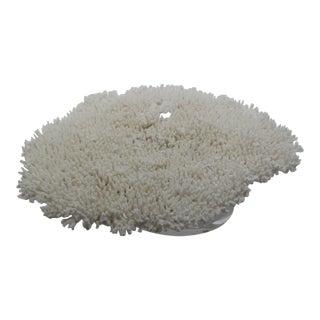 Large Vintage 21 Inch White Coral Specimen on Lucite Base For Sale