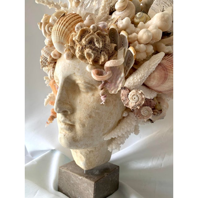 Stone Large Shell Hygiea Bust For Sale - Image 7 of 12