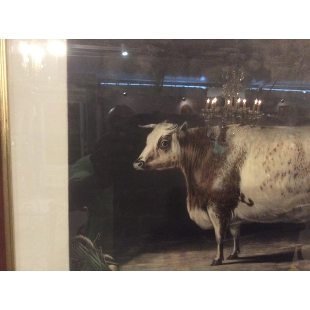 In the 19th Century, British livestock owners were breeding larger and stronger animals, and having paintings made to show...