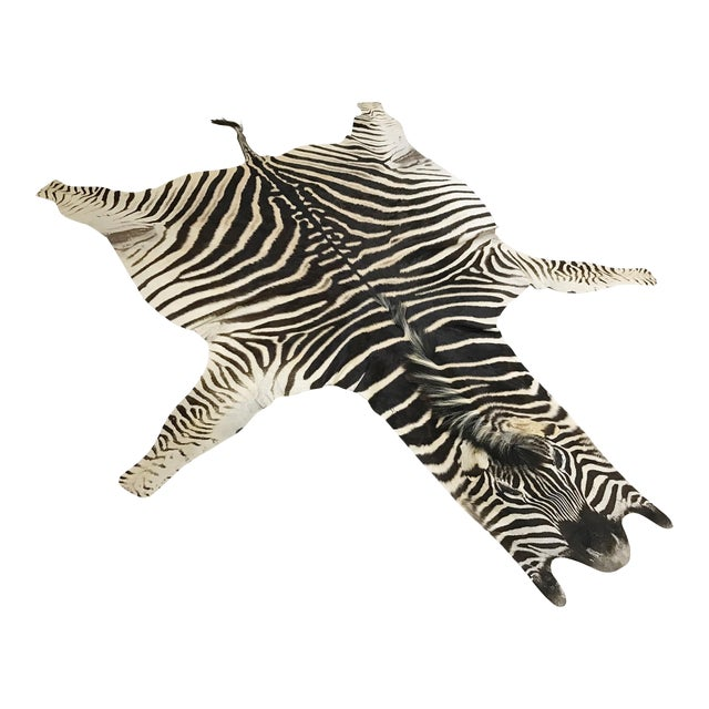 Zebra Hide Rug - 5′9″ × 7′4″ - Image 1 of 4