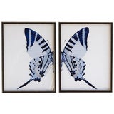 "Image of Split Blue Butterfly With Tail - 46"" X 29"" For Sale"