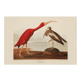 1990s Scarlet Ibis by Audubon, Large Chinoiserie Style Print For Sale