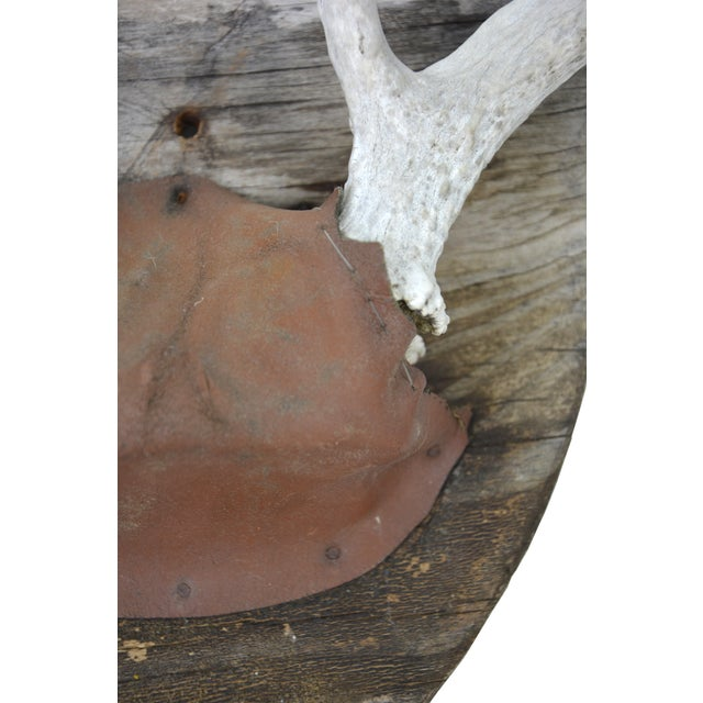 Gorgeous 1940s whitetailed deer antler mount on hand-made rustic wood plaque. Hand-stitched leather detail. Age wear.