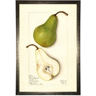 Pear Study in Pewter Shadowbox 13x19 For Sale