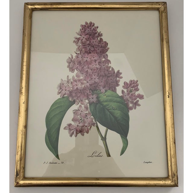 Reproduction Antique Botanical Print Lilac Framed For Sale - Image 12 of 12
