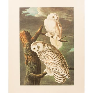1960s Cottage Lithograph of Snowy Owl by Audubon For Sale