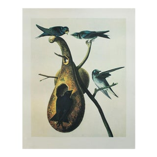 1966 Cottage Lithograph of Purple Martin by John James Audubon For Sale