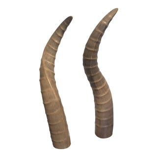 Faux Horns on Lucite Bases - a Pair For Sale