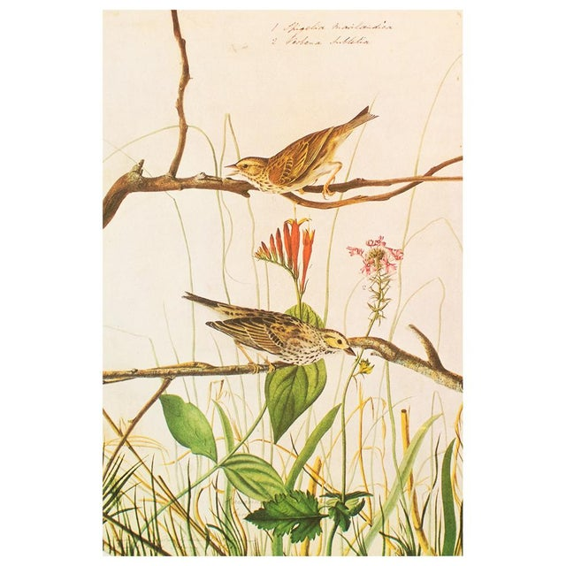 Printmaking Materials 1960s Vintage Savannah Finch and Savannah Sparrow Cottage Print by Audubon For Sale - Image 7 of 8