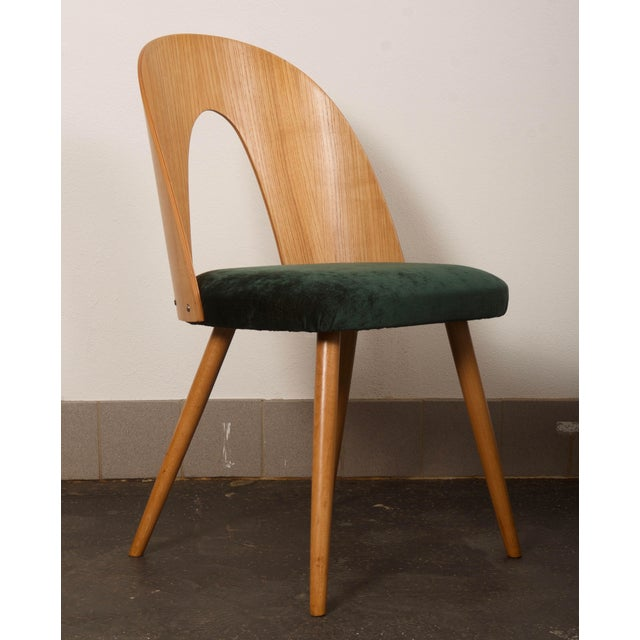 Mid-Century Modern Ash Dining Chairs by Antonin Suman for Tatra For Sale - Image 3 of 10