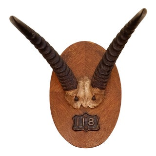 1920s Taxidermy Black Forest Antler Horns For Sale