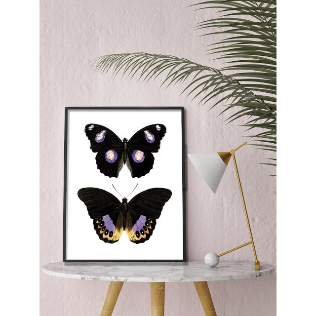 This victorian butterfly specimen has been remastered into this gorgeous piece that fits in both Traditional and Modern...