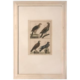 19th Century Histoire Naturelle Hawks Print For Sale