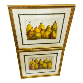 French Pear Framed Prints - a Pair For Sale