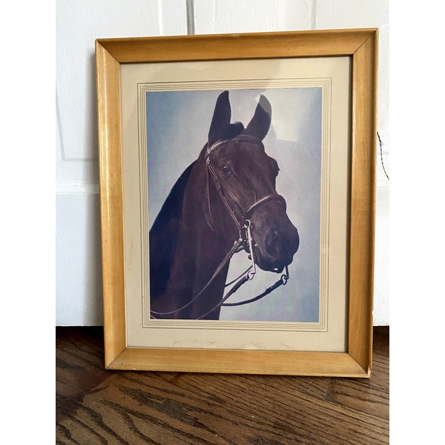 Mid 20th Century Horse Portrait Photograph, Framed For Sale In Denver - Image 6 of 9