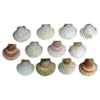 Natural Shell Serving Dishes - Set of 12 For Sale