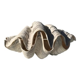 Pair of Giant Clam Shells For Sale