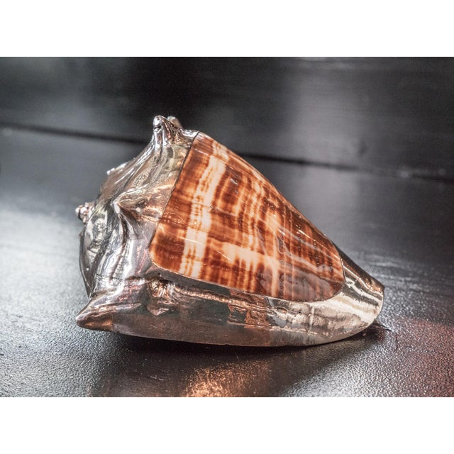 Partially Silvered Sea Shell King's Crown For Sale - Image 4 of 6