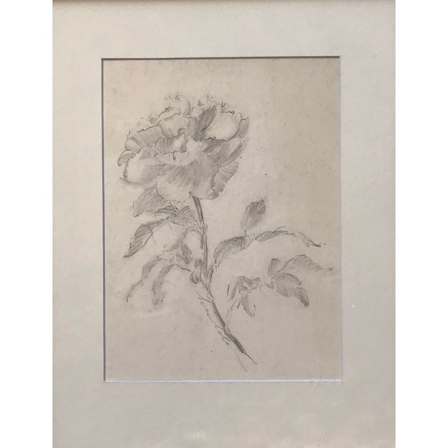 Antique original drawing of a flower by Charles Sheldon unsigned acquired from the artists estate. . Presented matted and...