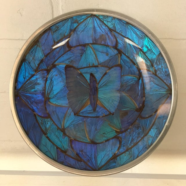 Aluminum Blue Morpho Butterfly Wing Art For Sale - Image 7 of 7