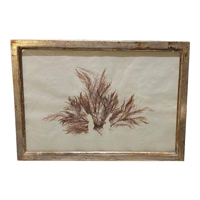 Seaweed Print For Sale