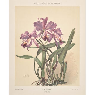 Matted 1902 French Botanical Orchid Chromolithograph For Sale