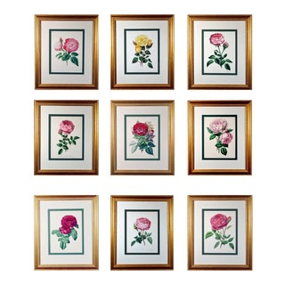 """Set of Nine Botanical Engravings of Roses, Henry Curtis-""""The Beauty of the Rose"""", Hand-Colored Lithographs For Sale"""