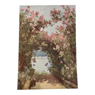 1905 Original Italian Print - Italian Travel Colour Plate - Oleanders, Isola Madre, Lago Maggiore For Sale