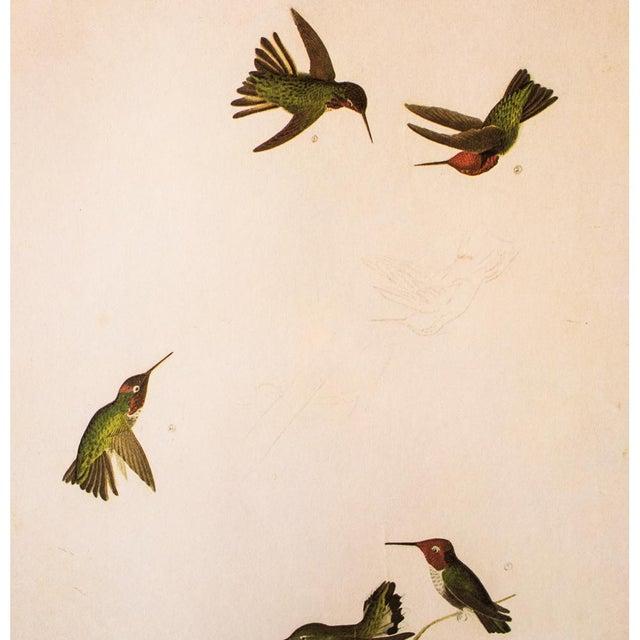 American Anna's Hummingbird by John James Audubon, 1966 Vintage Print For Sale - Image 3 of 8
