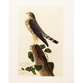 "Large 1966 Audubon ""Le Petit Caporal"" Reproduction Lithograph Print For Sale"