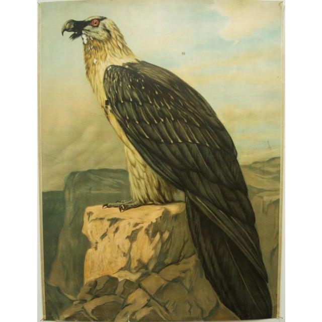 German vintage eagle school poster For Sale - Image 6 of 7