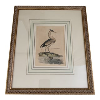 Framed Antique English Framed Bird Print For Sale