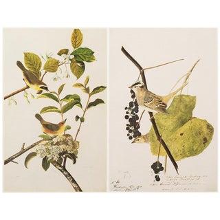 "1966 Cottage ""Birds of America"" Lithograph Prints by John James Audubon - Set of 2"