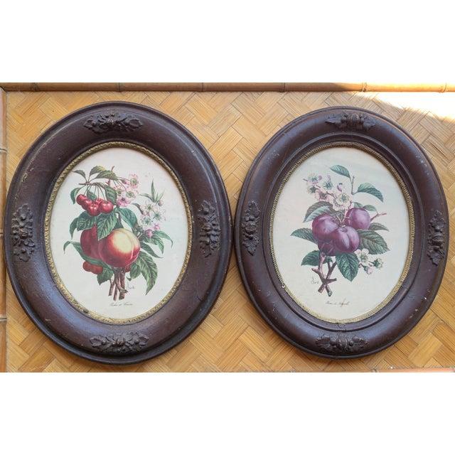 Antique Framed Botanical Prints - a Pair For Sale In Charlotte - Image 6 of 6
