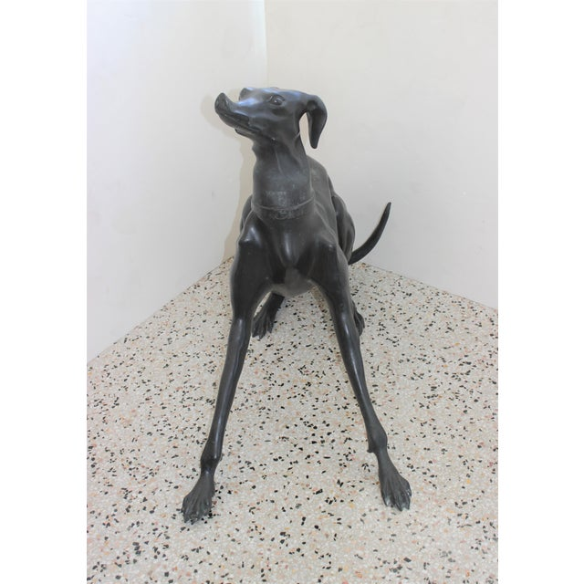 "Bronze Italian Greyhound 31"" Sculpture - Indoor or Outdoor For Sale - Image 10 of 13"