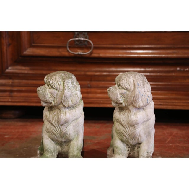 Stone French Vintage Patinated Cast Stone Saint Bernard Dogs Sculptures - a Pair For Sale - Image 7 of 9