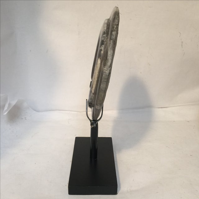 Fossil on Stand For Sale In Sacramento - Image 6 of 9