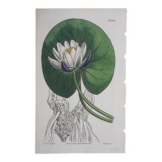 Antique Botanical Engraving-Water Lily For Sale
