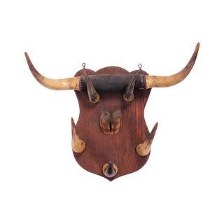 Steer Horn Plaque For Sale