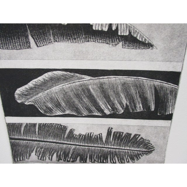 Modern Vintage Lithograph in Black & White of Leaves Titled: Musa Paradisiaca For Sale - Image 3 of 5