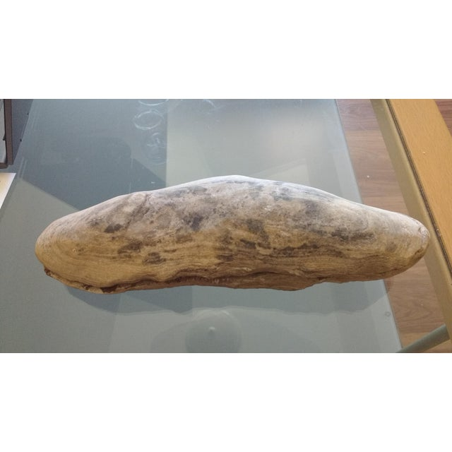 Fossil Fish Concretion from Brazil For Sale - Image 5 of 8