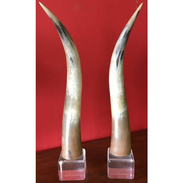 Country Texas Longhorns Cattle Horns on Lucite Bases - A Pair For Sale - Image 3 of 7